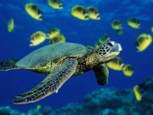 I like Turtles...